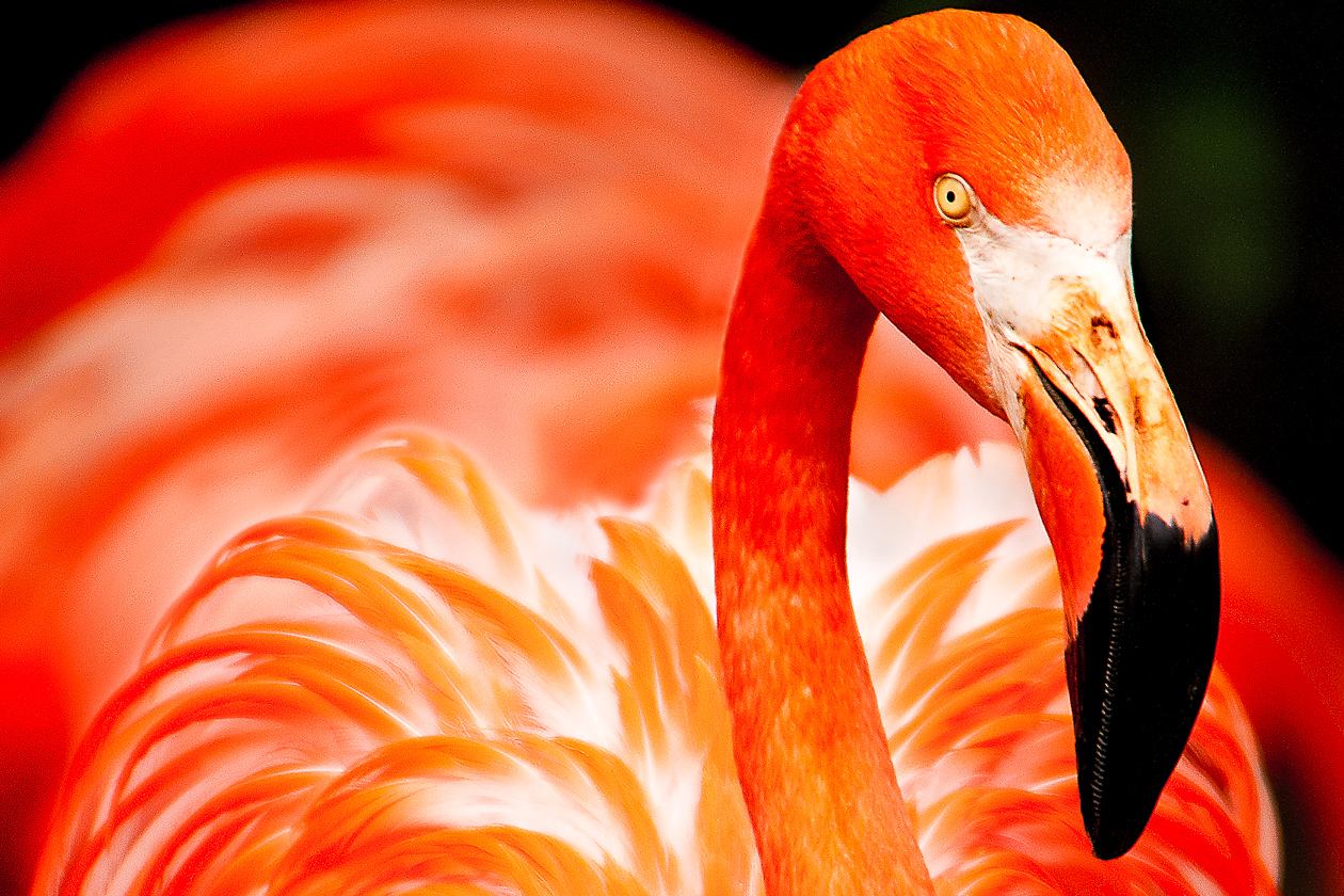 inspiration-flamingo
